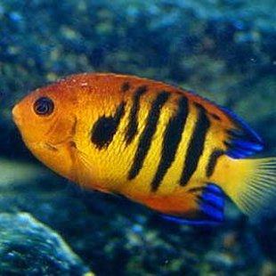 Même le poisson qui vit dans l'eau à soif.